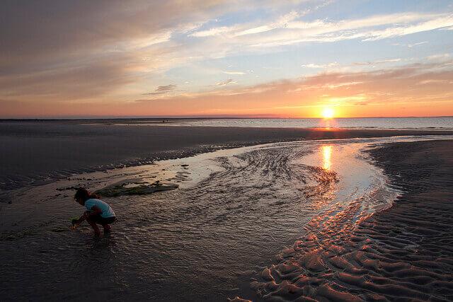 ケープコッドの海辺